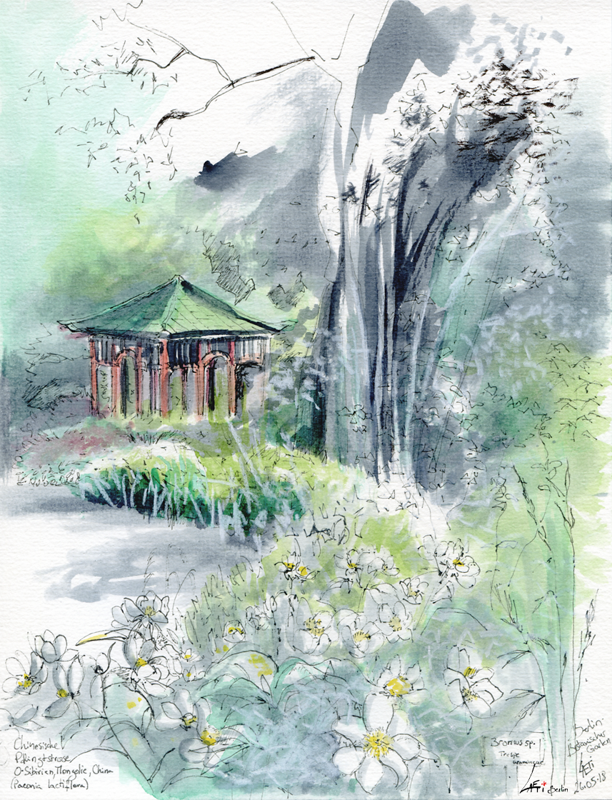 260518 Pagode Botanischer Garten Berlin Dahlemsteglitz